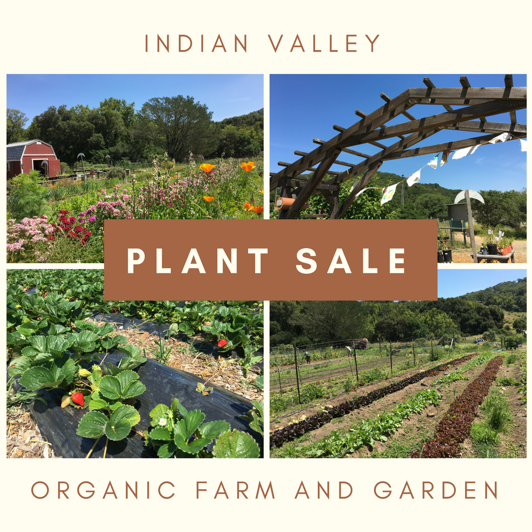Images at the Indian Valley Organic Farm and Garden